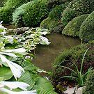 Hosta in a Zen Garden by PB-SecretGarden