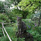 Cat in a Zen Garden #8 - Drôme - France by PB-SecretGarden