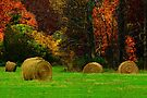 Autumn Harvest Mosaic by NatureGreeting Cards ©ccwri