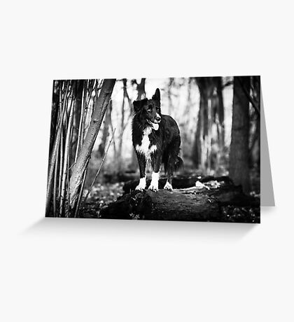 Forest Dog Greeting Card