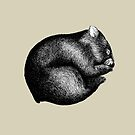 Wombat sleeping by AirDrawn