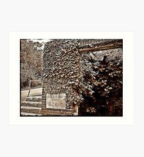 Vines Engulf Rocks Art Print