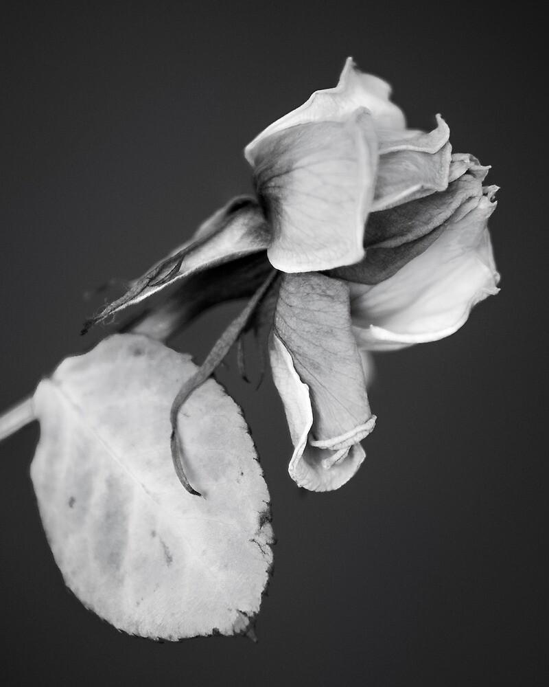 Wilted by John Burtoft
