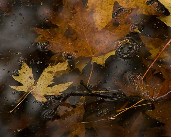 A Frog in the Fall by Shawn H Zimmerman