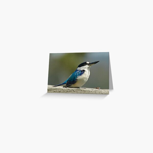 KINGFISHER ~ Forest Kingfisher AQ23G57S by David Irwin Greeting Card