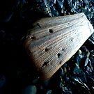 Driftwood by marting04