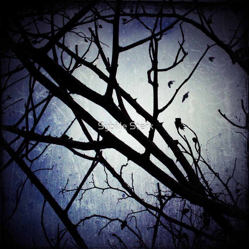 Winter Moon by Sybille Sterk