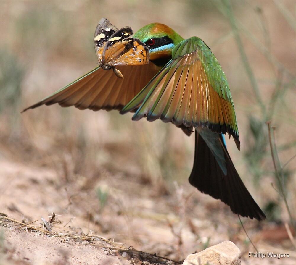 Butterfly Heist by Phillip Weyers