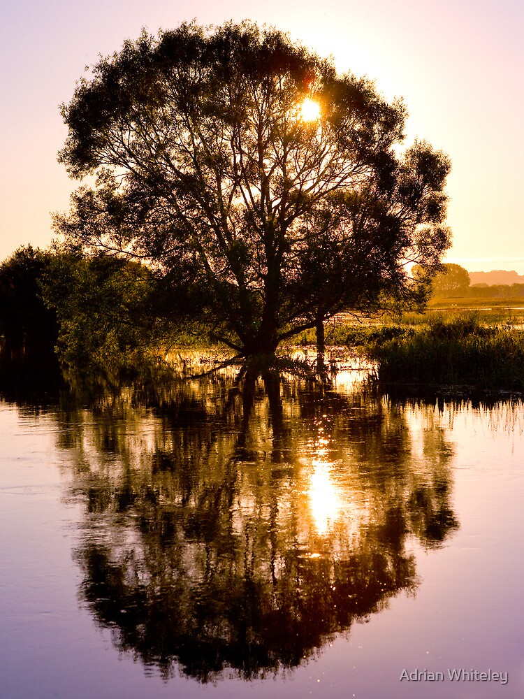 Willow at Dawn by Adrian Whiteley