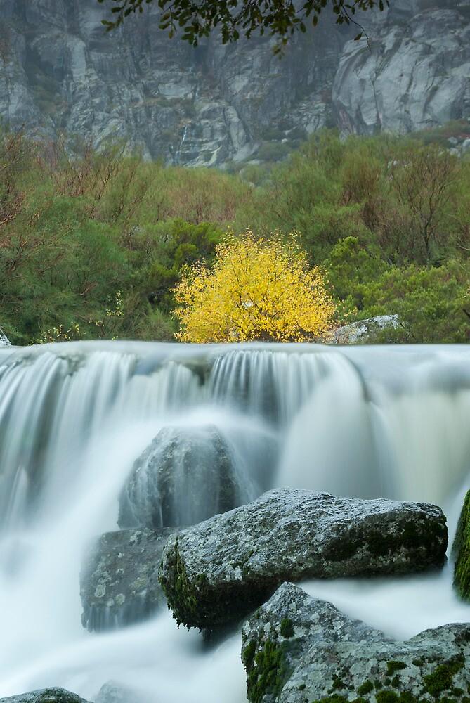 Yellow bush over water by Fernando Romão