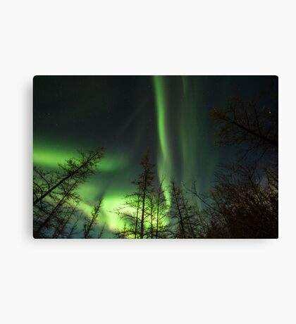 Yukon Northern Lights 1 Canvas Print