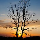 Sunset Tree by Apostolos Mantzouranis