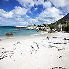 South Africa - Boulders Beach by mattnnat