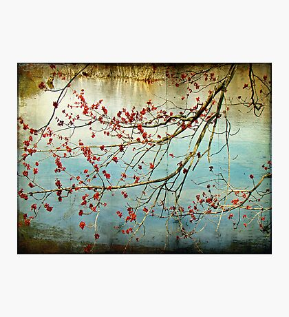 Budding Out - Tylersport Open Space Pond - PA Photographic Print