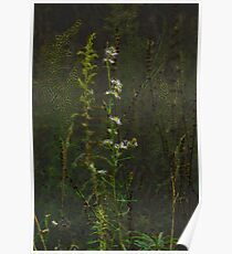 Flower of Payne's Praries Poster