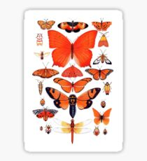 Orange Insect Collection Sticker