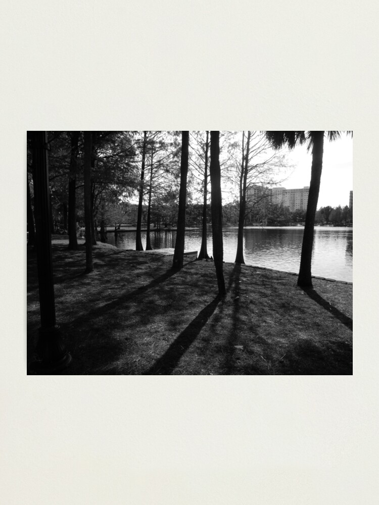 Alternate view of The Woods  Photographic Print