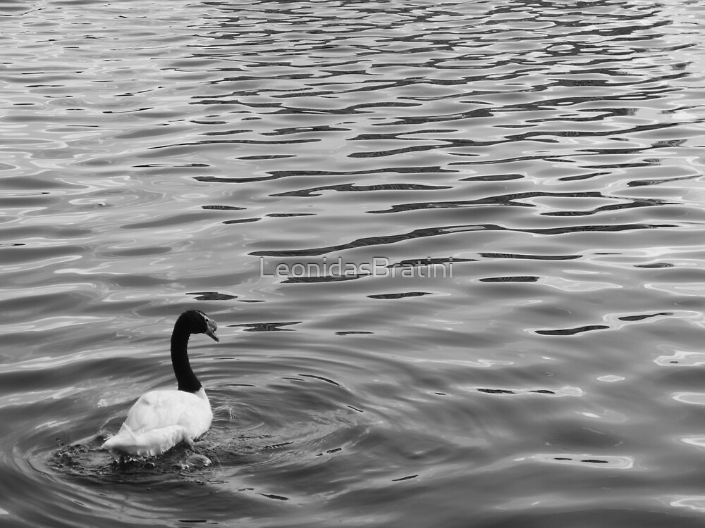 Black and White Swan by LeonidasBratini