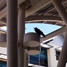 Another Crow!!  10 12 12  (note the architecture) by Robert Phillips
