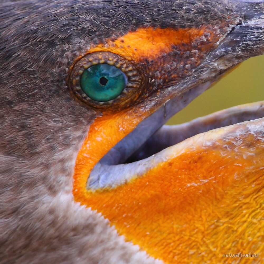 Cormorant Abstract by naturalnomad