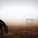 Fog at the Farm by RockyWalley