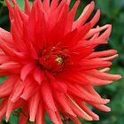 Full Bloom by Geraldine Miller