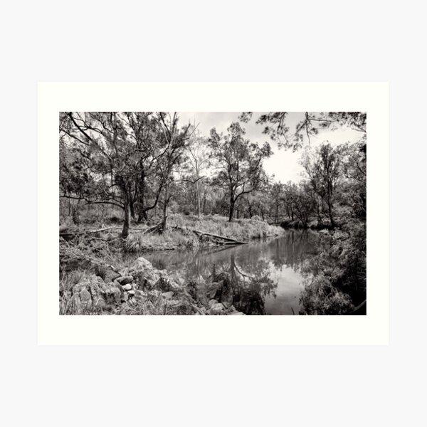By the Creek - Crows Nest National Park - Australia Art Print