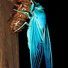 Gem in the night  - final stage of Transformation -  Green Grocer Cicada  by john  Lenagan
