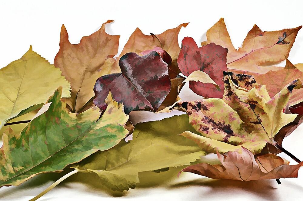 Leaves by Jaydew70