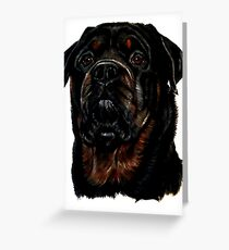 Male Rottweiler Greeting Card