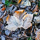 Bed of leaves by Trish  Anderson