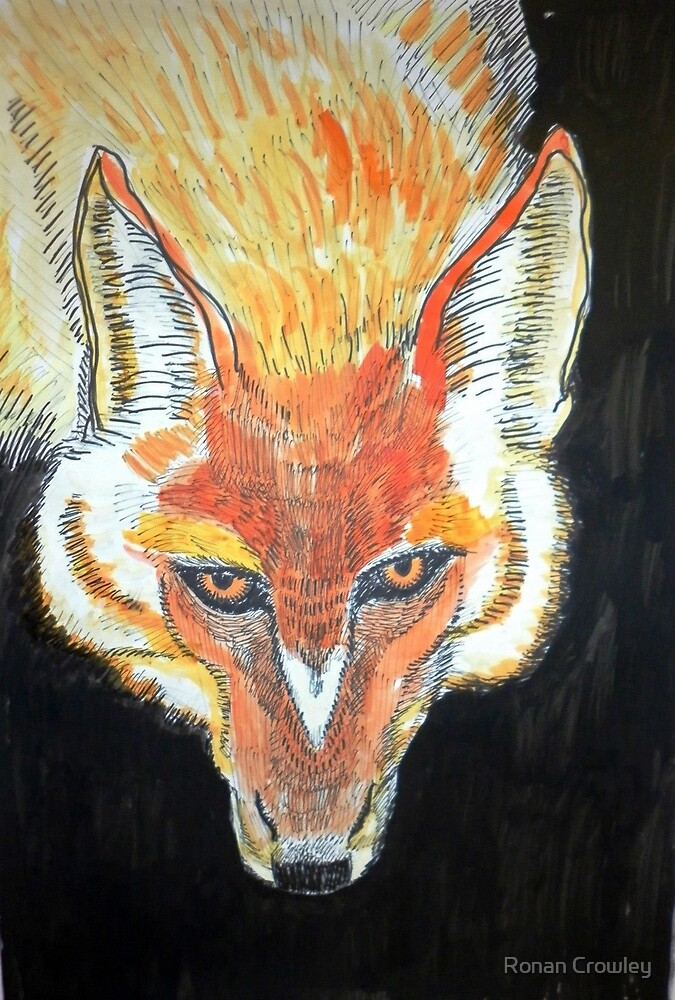fox by Ronan Crowley
