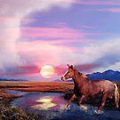 Moon Dance by Arla M. Ruggles