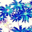 Blue flowers by Pauli Hyvönen