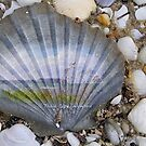 Table Cape on a shell by Michelle Ricketts