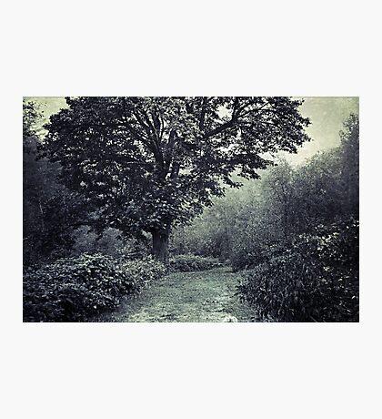 Tree of life 2 Photographic Print