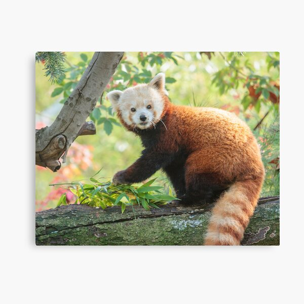 Look what appeared on the branch! Canvas Print