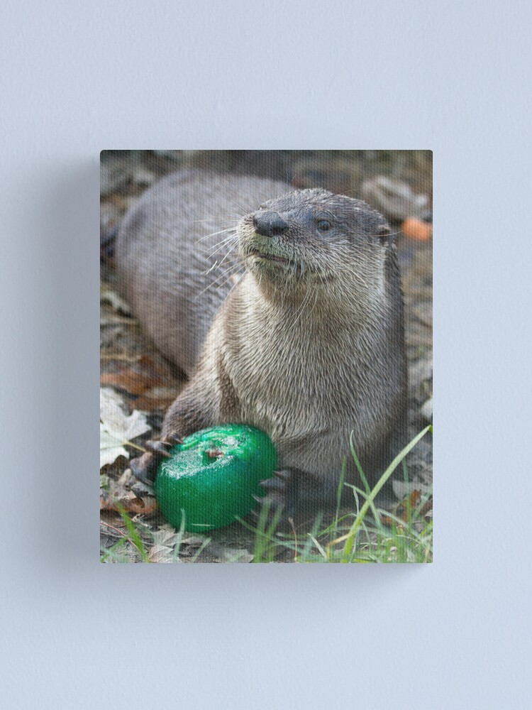 Alternate view of Otter has a green toy Canvas Print
