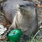 Otter has a green toy by Anthony Brewer