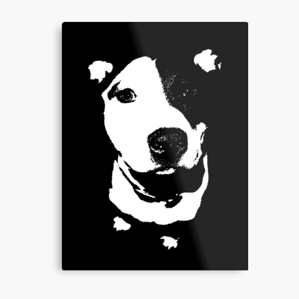 Louie - Black and white pit bull Metal Print