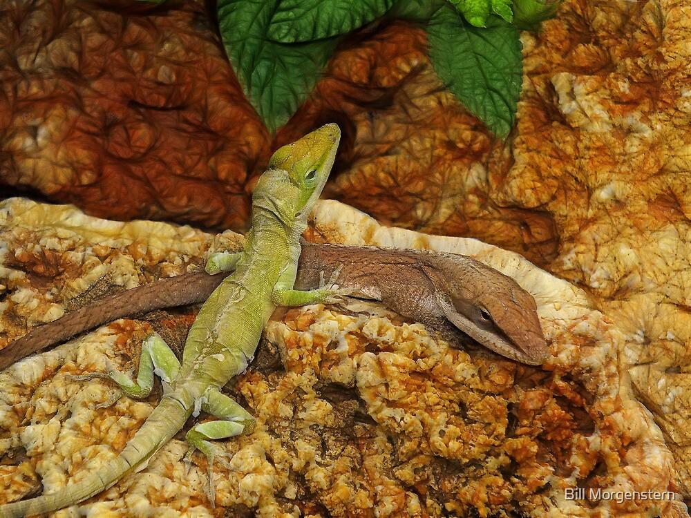 Lizard Love by Bill Morgenstern