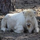 Calf Golden Bison by Jazzy724