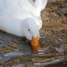 Pilgrim Goose by Jazzy724