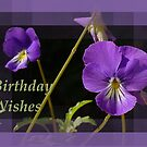 Viola Pansies Birthday Wishes Greeting by taiche
