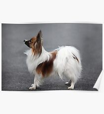 a small fluffy dog the side Poster