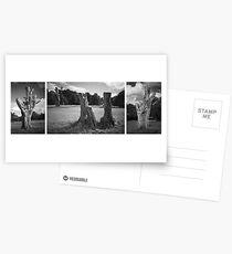 Trees on Hampstead Heath Postcards