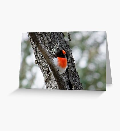 Red-Capped Robin Greeting Card