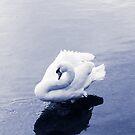 Swan by Rustyoldtown