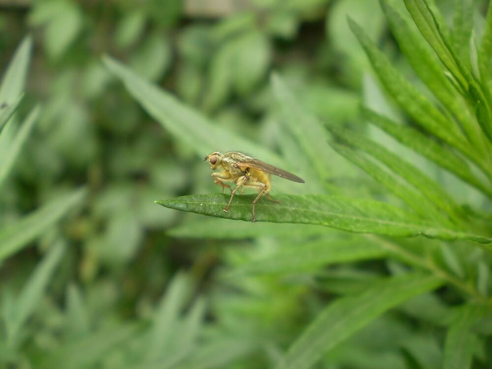 Bug On A Leaf Two by Drewlar