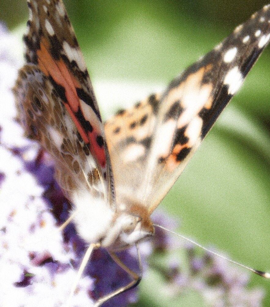 Butterfly Up Close by Drewlar